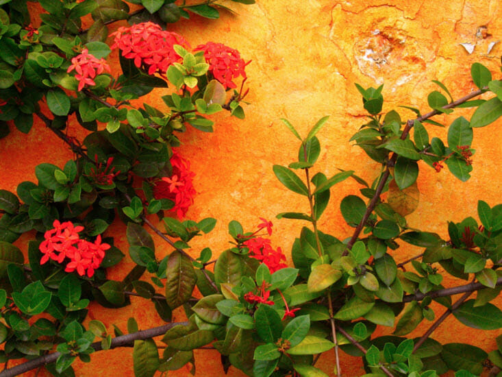 carribean-colors-flowers