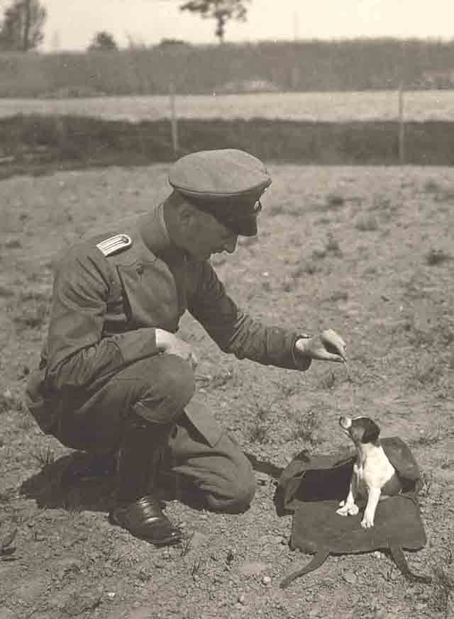 Vintage photos of folks with puppies!