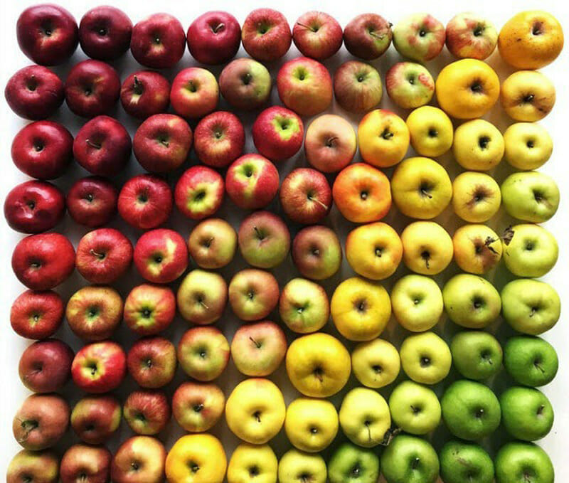 Food organizing photo project -- food gradients
