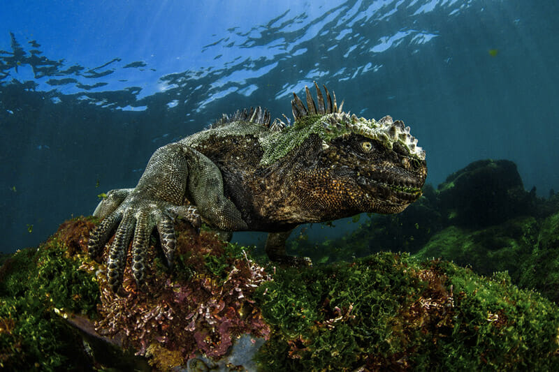 Image from the Underwater Photographer of the Year competition